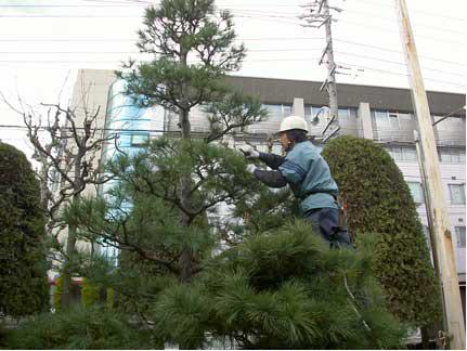 お庭の手入れ・庭木剪定