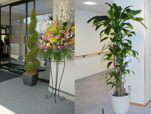 観葉植物レンタル部門