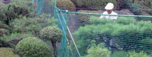 庭管理・剪定・伐採事例