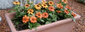 花プランター・花壇事例