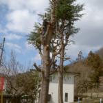 近隣の方の悩みの種にもなる。公園の大きくなりすぎた木、大きく張り出した枝。